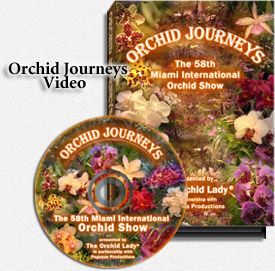 Orchid Journey's Video